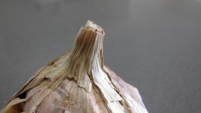 tête de l'ail