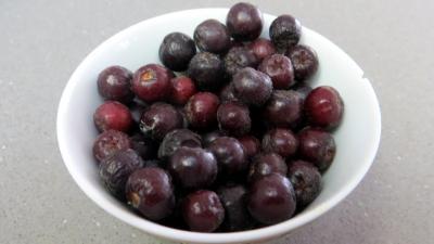 Aronia prunifolia rubina