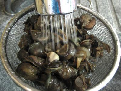 Escargots aux épinards - 5.1
