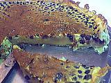 myrtille : Clafoutis aux myrtilles
