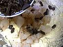 Gâteau aux poires et aux pépites de chocolat - 9.1