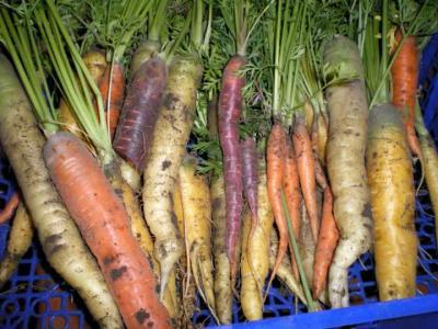 carottes variées