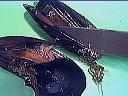 Salade d'épinards tièdes aux moules et son coulis de ciboulette - 4.1