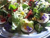 pois chiches : Assiette de violettes et primevères en salade