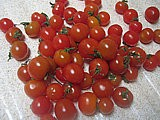 Grappe de tomates cerise
