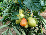 Tomates Roma