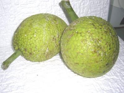 Fruit de l'arbre à pain