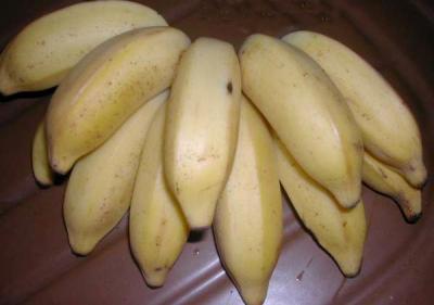 bananes figues ou mignonnes