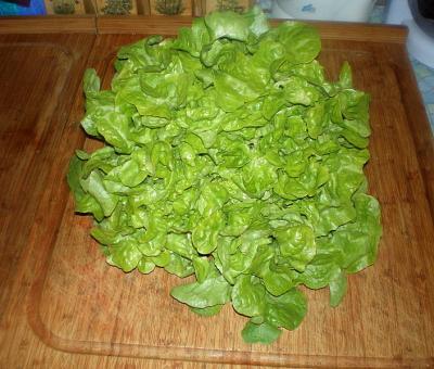 laitue feuilles de chêne