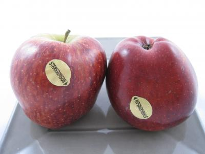 pommes starkrimson