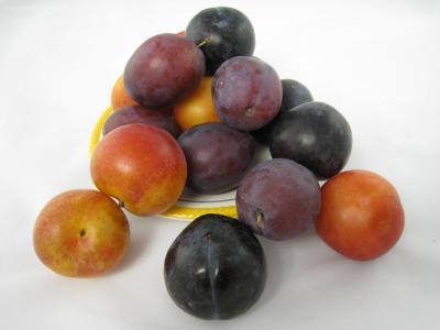 prunes de couleurs différentes