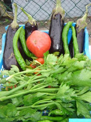 légumes de l'été